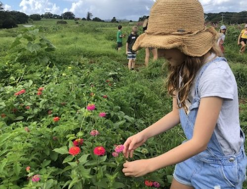 School holiday fun at The Farm
